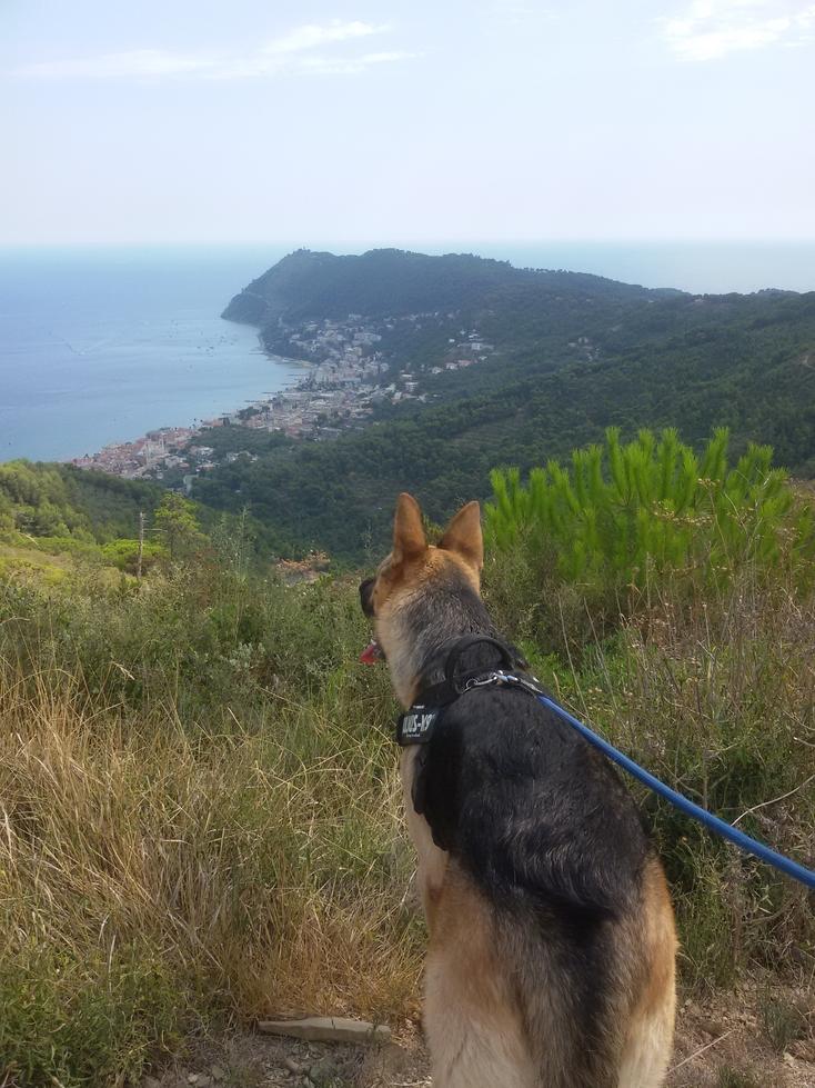 Il panorama sembra piacere anche a Zeus