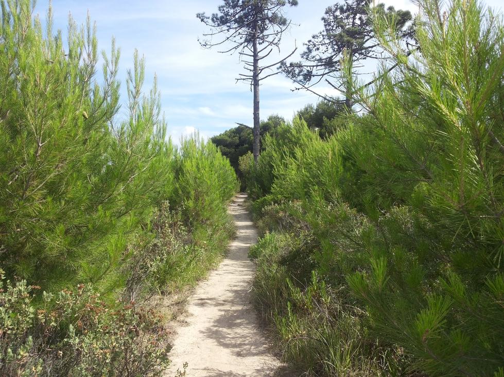 Uno dei sentieri del percorso