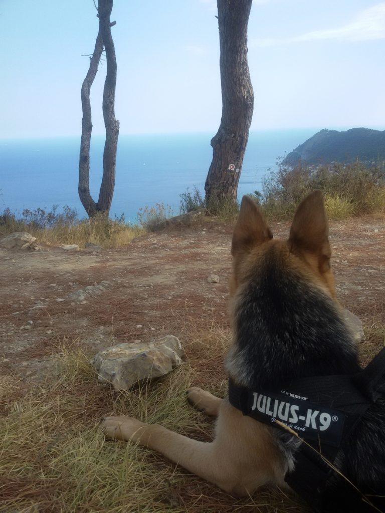 Il mare visto da qui è stupendo anche per Zeus
